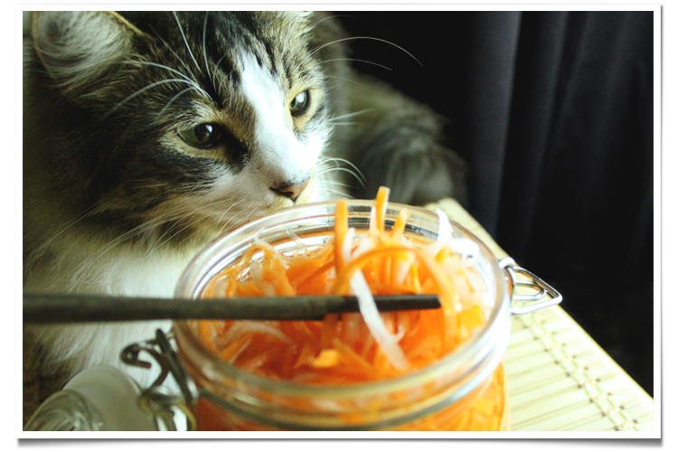 Pickled Carrots and Daikon Cat